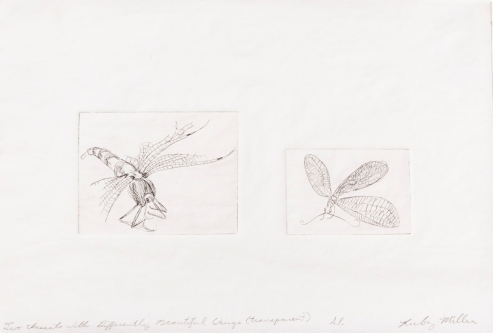 """""""Two Insects with Differently Beautiful Wings"""" Intaglio print on tracing paper. 2005"""