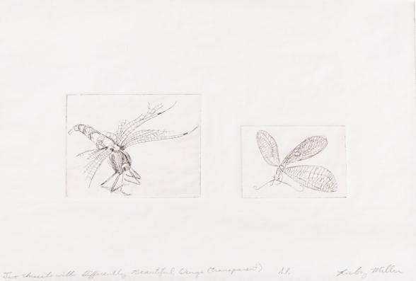 """Two Insects with Differently Beautiful Wings"" Intaglio print on tracing paper. 2005"