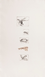 """""""Five Insects"""" Intaglio print with chincole. 2005"""