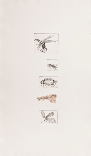 """Five Insects"" Intaglio print with chincole. 2005"