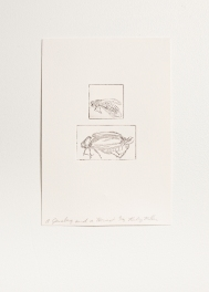 """""""A Junebug and a Hornet"""" Intaglio print. 2005"""