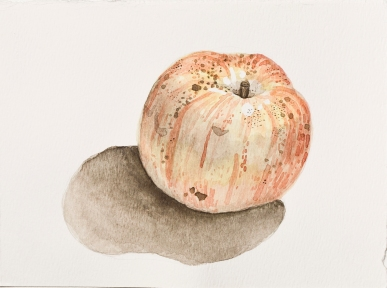 """Apple"" Watercolor. 2017"